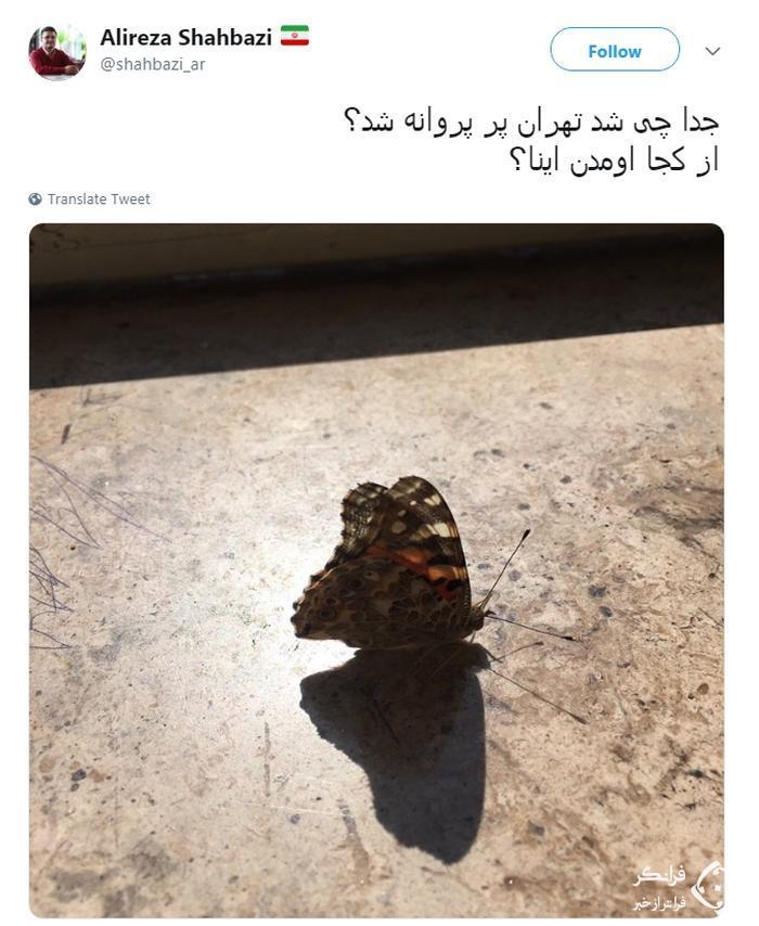 نکنه ملخ ها اومدن اینجا تبدیل به پروانه شدن؟!