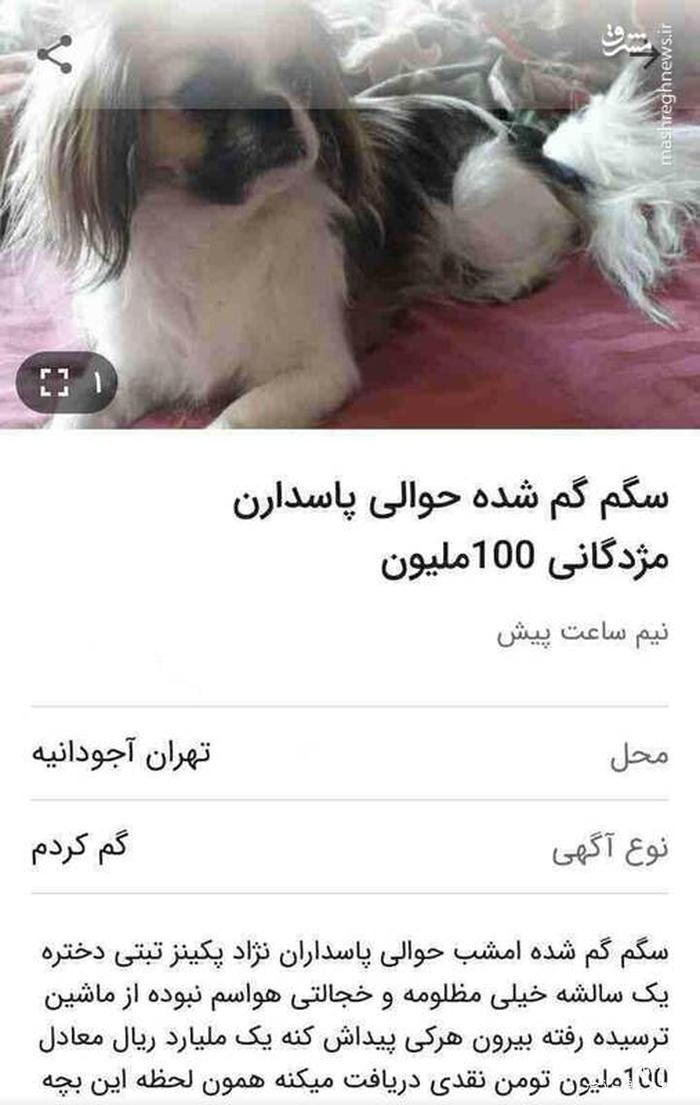 مژدگانی ۱۰۰ میلیونی برای یک سگ +عکس