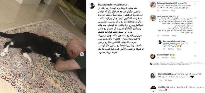 گربه بزرگمهر حسین پور